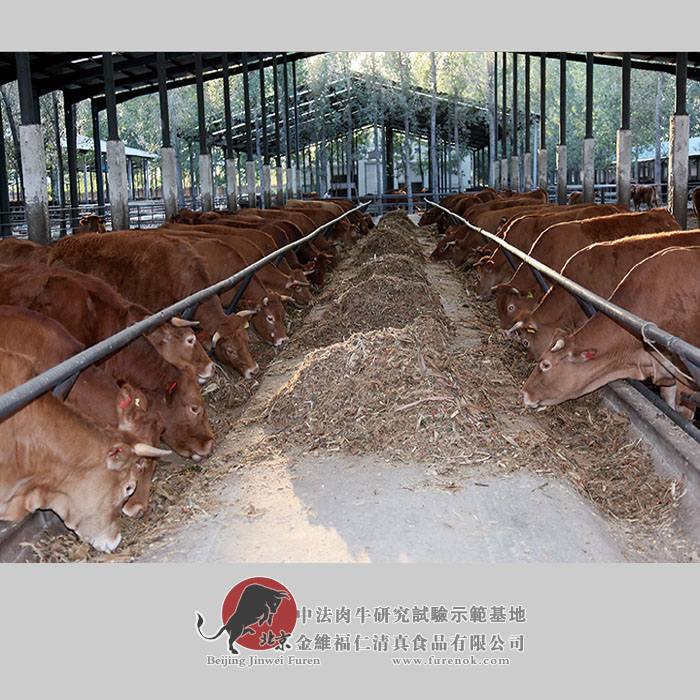 One side of water and soil to raise one cow - Sino-French beef cattle industry cooperation and thinking
